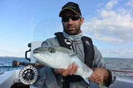 davebrookerkingfish