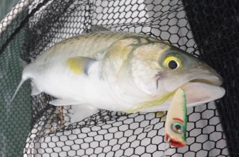 flyfishingnz